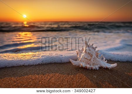 Sea Shells On The Beach At Sunrise