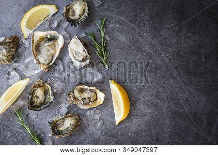 Fresh Oysters Seafood On Black Plate Background / Open Oyster Shell With Herb Spices Lemon Rosemary