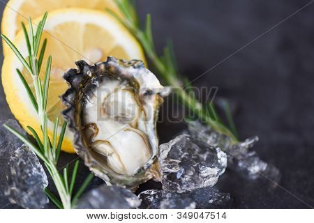 Close Up Open Oyster Shell With Herb Spices Lemon Rosemary Served Table And Ice Healthy Sea Food Raw