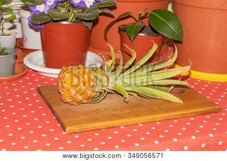 Mini Pineapple Benefits, Fresh Golden Pineapple Fruit