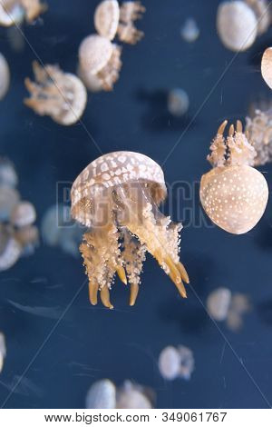 Close Up Of Jelly Fish In Sea Water