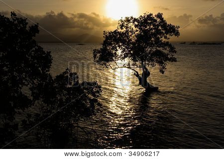 Silhouette Of A Lonely Tree In The Ocean In The Philippines