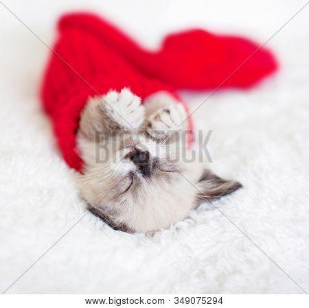 Kitten sleep in red sock. Little cat sleep on white plaid