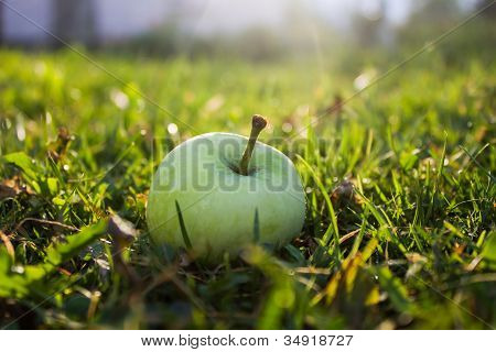 Apple in grass