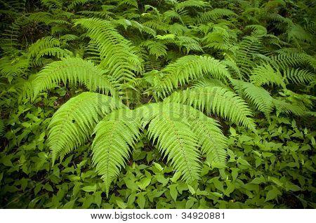 Plant of  fern
