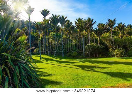 South Island in New Zealand. Adorable green grass lawn in palm grove. Travel to an exotic country. Sunny summer day. The concept of ecological, active and photo tourism