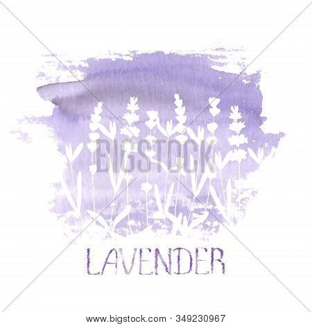 Lavender Flower White Silhouettes On Purple Stain Isolated On White Background. Watercolour Hand Dra
