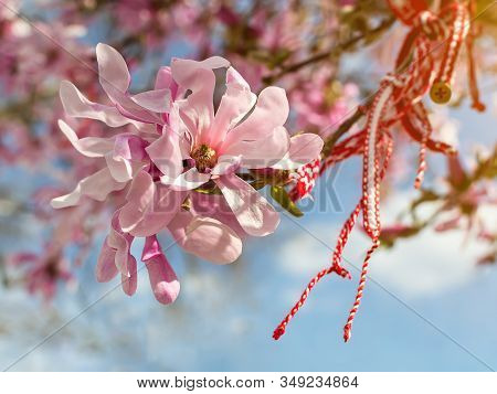 Bulgarian Folklore Tradition Amulet Martenitsa On A Branch Of A Blooming Pink Magnolia. Balkan Amule