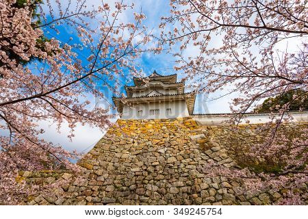 Akashi, Hyogo, Japan castle tower and cherry blossoms in spring.