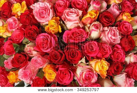 Backdrop of colorful paper roses background in a wedding reception with soft colors. Closeup image of beautiful flowers wall background with amazing red and white roses. Top view