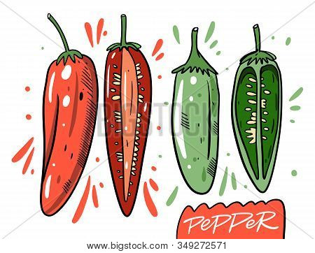 Red Chilli Pepper And Green Jalapenos Pepper. Whole And Half. Hand Drawn Vector Illustration In Cart