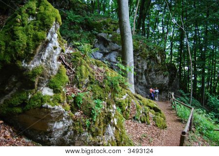 Family Hike In A German Forest In Hesse