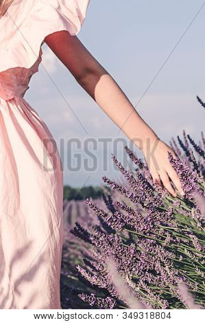 Lavender Fields Near Valensole In Provence, France. Blooming Lavender In The Summer.a Girl Walks In