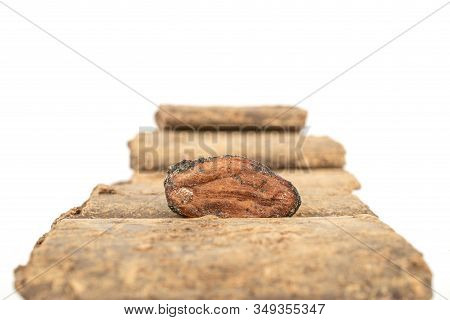 One Fresh Brown Cocoa Bean On Cocoa Butter Bars Line Isolated On White Background