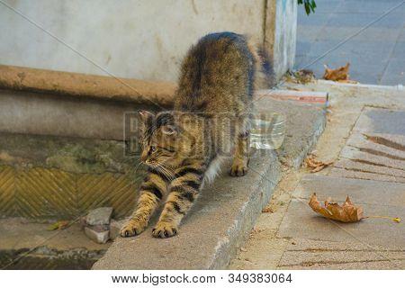 Kadikoy Street Cat 3