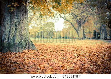 Autumn Landscape. Orange Leaves In A Park