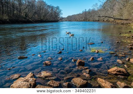 A Pair Of Canadian Geese Swimming Downstream On The River On A Bright Sunny Day In Winter With The B