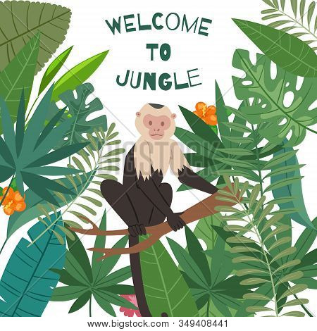 Monkey White Headed Capuchin In Jungles Leaves And Summer Tropical Frame Vector Illustration Poster.