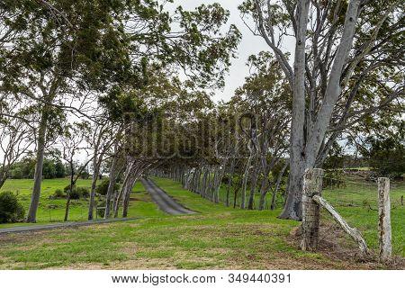 Waimea, Hawaii, Usa. - January 15, 2020: Parker Ranch Headquarters. Lane Between Slanted Trees Leads