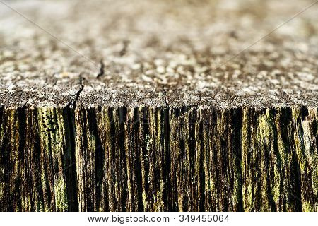 Close Up Of An Old Piece Of Timber In Shallow Depth Of Field Creating Intentional Blur With A Macro