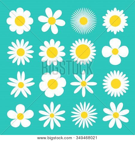 Daisy Chamomile Icon. White Camomile Super Big Set. Cute Round Flower Head Plant Collection. Love Ca