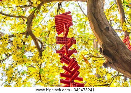 Red Firecrackers On Yellow Apricot Blossom In Vietnam Tet Holiday