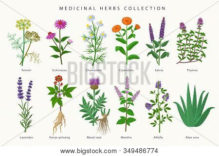 Medicinal Herbs And Flowers Big Collection Of Illustrations In Flat Design Isolated On White Backgro