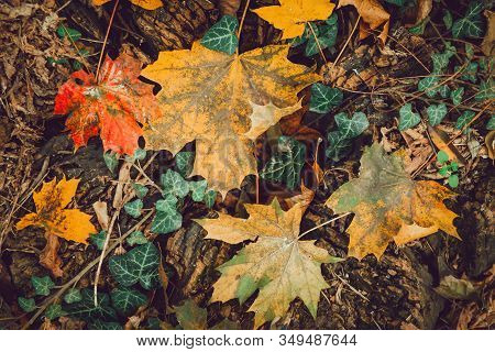 Colorful Autumn Leaves On In Forrest Top View