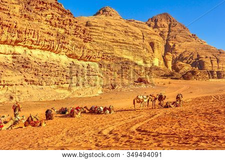 Group Of Dromedary Camels Waiting For Tourists In The Middle Of The Valley Of The Moon, Wadi Rum Des