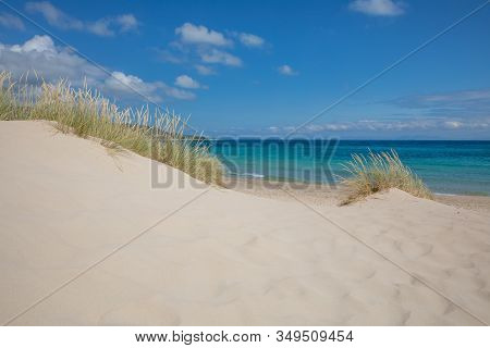 Sand Dunes With Plants And Atlantic Ocean In Beach Of Cadiz