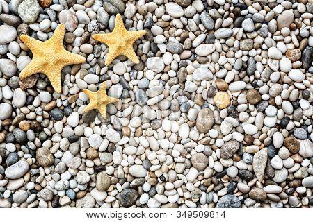Starfish on the beach of stone pebbles