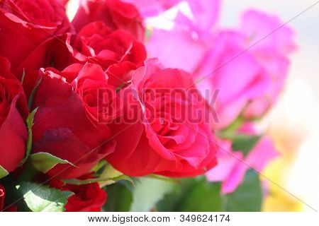 Close-up Of Red Roses Group With Blur Pink Rose Background In Street Market, Outdoors Street Roses M