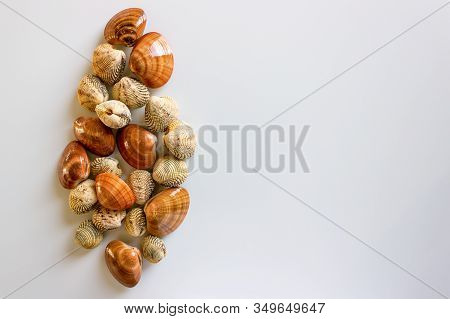 Fresh Clams, Raw Cockles On A White Table. Concept - Clean Monday, Healthy Food, Aphrodisiac; Medite
