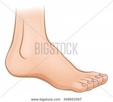 An Illustration Of A Cartoon Human Foot