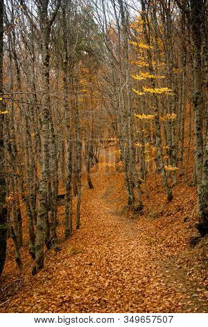 Road In Forest Covered With Leaves In Autumn