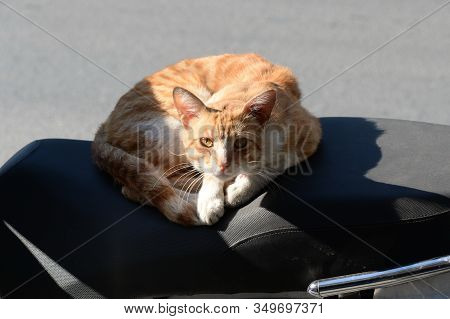 Homeless Red Cat Basks On A Scooter Seat On The Street Of Istanbul