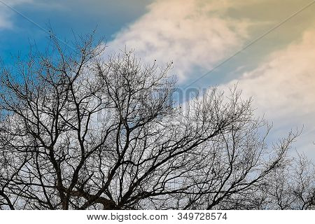 Bare Tree Branches Without Leaves During Winter Against Blue Sky