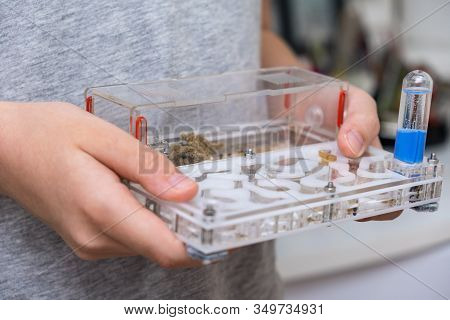 A Boy Holding An Acrillic Ant Farm, Formicarium In Hands, Research Model Of Ant Colony.