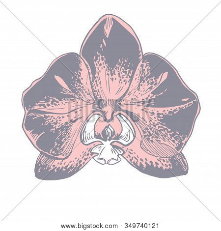 Cute Spotty Orchid Flower Isolated Oh White Bacground. Hand Drawn Element For Design For Printing On
