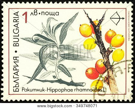Moscow, Russia - February 09, 2020: Stamp Printed In Bulgaria Shows Branch Of Sea-buckthorn (hippoph