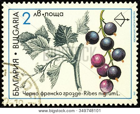 Moscow, Russia - February 09, 2020: Stamp Printed In Bulgaria Shows Black Currant (ribes Nigrum), Se
