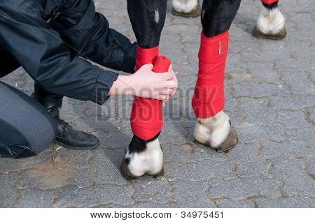 Bandaging  Of Horses' Legs.