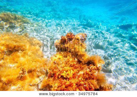 Baearic islands underwater sea bottom snorkeling view
