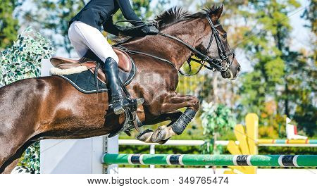 Horse And Rider In Uniform. Beautiful White Horse Portrait During Equestrian Sport Show Jumping Comp