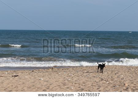 Beautiful Brown Sand And Blue Clear Sky On The Beach And A Black Male Dog Running On The Beach.beach