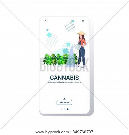 Woman Farmer Watering Cannabis Industrial Hemp Plantation Growing Marijuana Plant Drug Consumption A