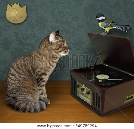 The Beige Cat Is Sitting Near A Turntable Vinyl Record Player With A Radio  Tuner. The Tit Sits On A