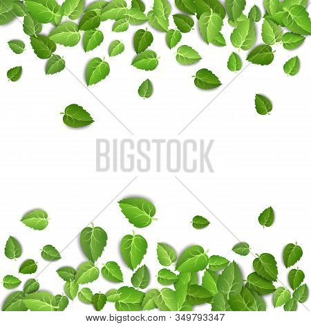 Flying Green Leaves On White Background. Spring Leaf Pattern On Isolated Backdrop. Fall Fresh Leaves