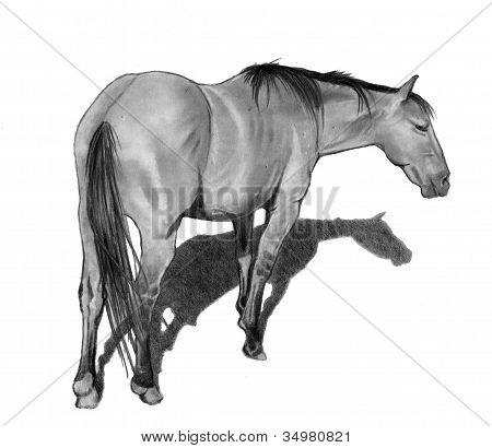 Pencil Drawing of Standing Horse