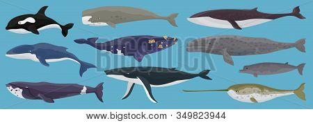 Sea Whale Vector Cartoon Set Icon.vector Illustration Marine Animal Of Whale.isolated Cartoon Icon O